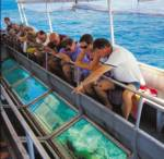 Cairns   Reef Cruises   Activity  •  Sunlover Cruises
